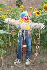 garden(0.0), autumn(0.0), agriculture(1.0), flower(1.0), yellow(1.0), scarecrow(1.0), flora(1.0), spring(1.0),