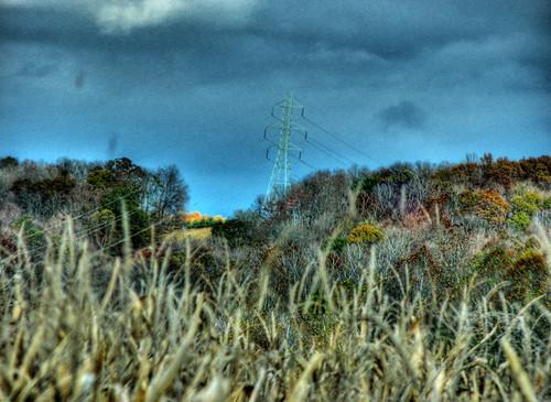 autumn leaves weeds october powerlines pikecountyohio dok1 ohiofoothills