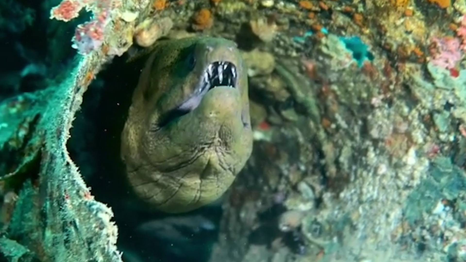 scuba diving malaysia