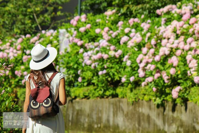 杉林溪繡球花8