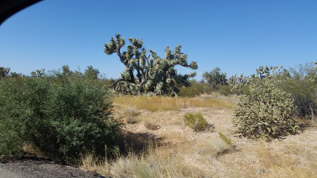 Joshua Trees on US-93