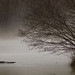 FoggyMorning by davidkdc