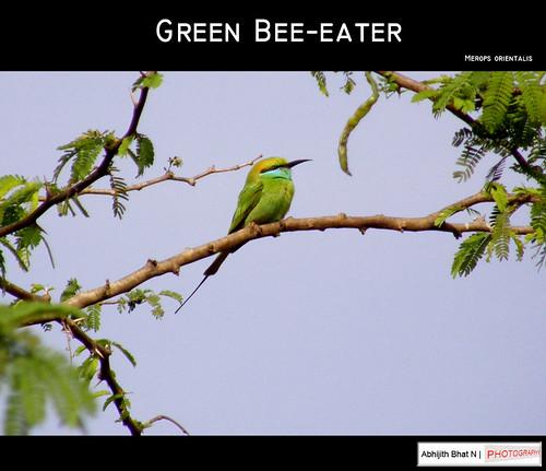 greenbeeeater greebeeeater abhijith abhijithbhatn