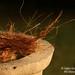 Coir in Pot by Bingzy