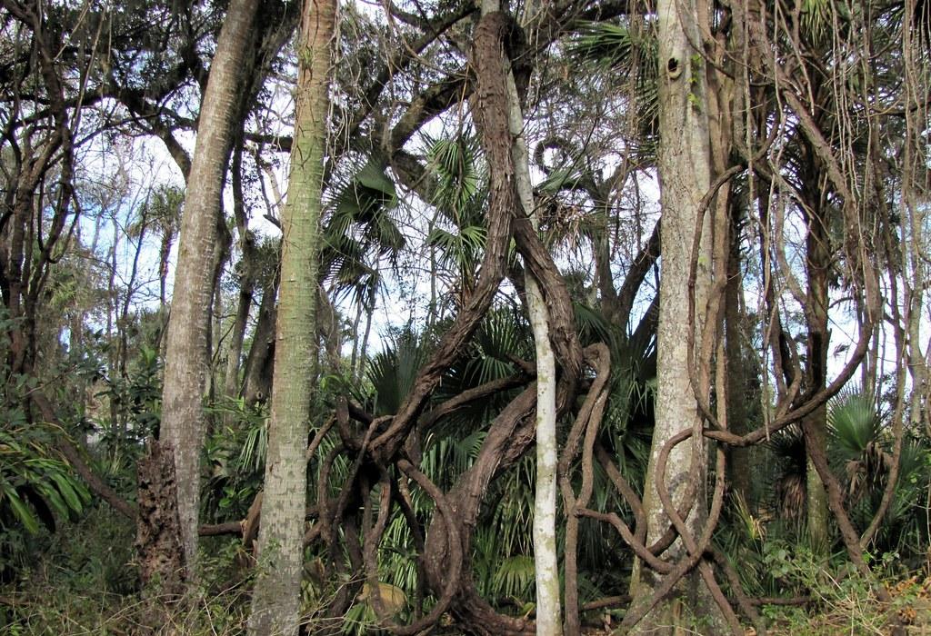 Sugar Mill Botanical Gardens Volusia County Florida Around Guides