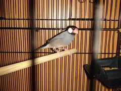 animal, cage, pet, finch, bird,