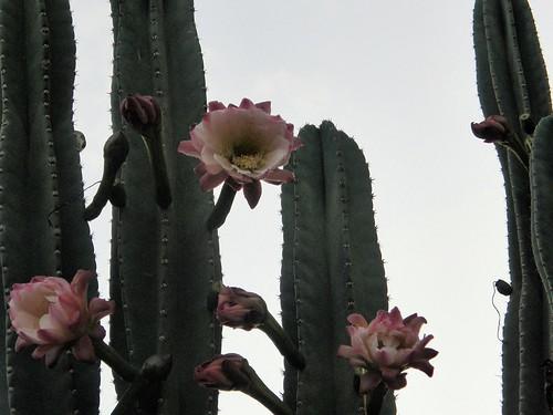 Cactus y suculentas im genes del mundo vegetal im for Suculentas por mayor
