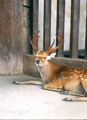 奈良公園の鹿はカメラ嫌い? by Noël Café