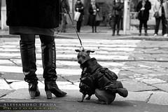 Vita da cani...