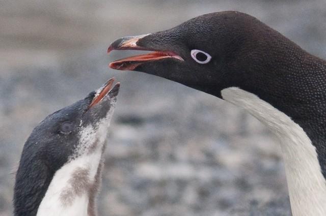 EFD Gourdin Island, Antarctica-238