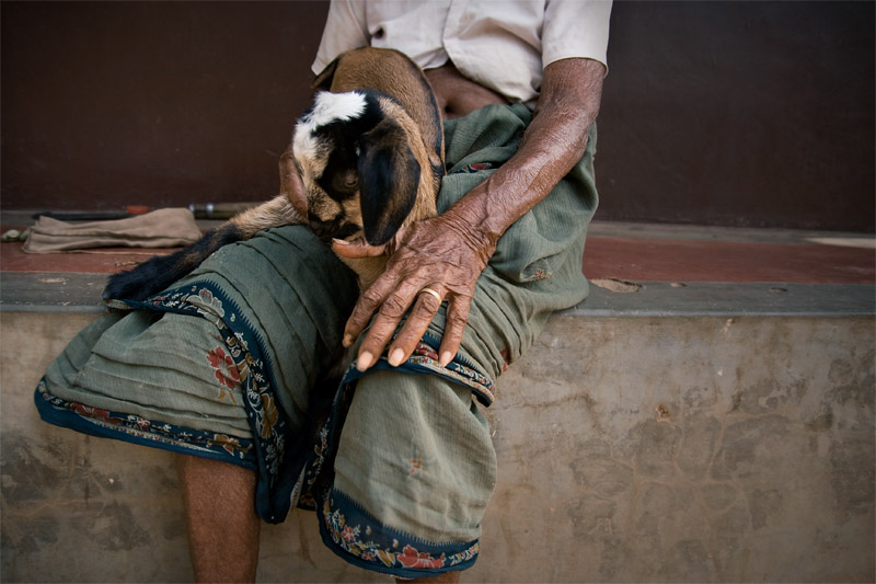 Maluvamma's goat!