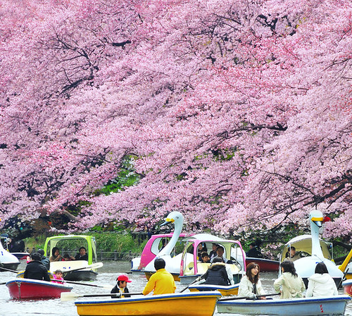 SPRING at INOKASHIRA PARK