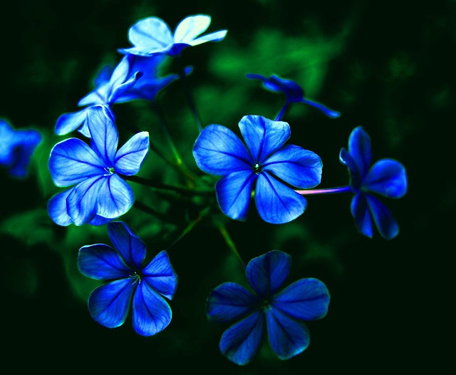 avatar movie flowers: www.beyondthebeauty.com/css/avatar-movie-flowers