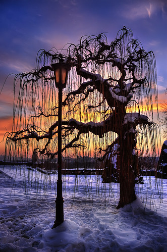 sunset sky snow tree nature clouds serbia belgrade