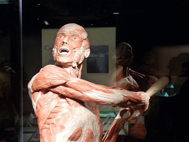 20100429 bodyworlds calgary - 20