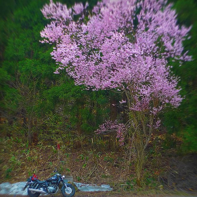 Honda Phantom Motorcycle For Sale