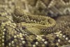 "<a href=""http://www.flickr.com/photos/michaelransburg/4587070329/"">Photo of Vipera ammodytes by Michael Ransburg</a>"