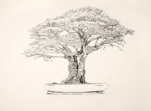 "Dick Rauh, Ulmus parvifolia, 2008  Pen and ink on Arches 300 lb. hot press, 16"" × 20"". © Copyright Brooklyn Botanic Garden"