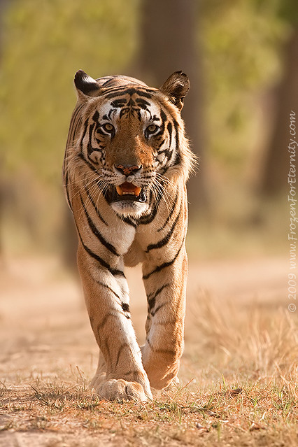 The Emperor of Kanha