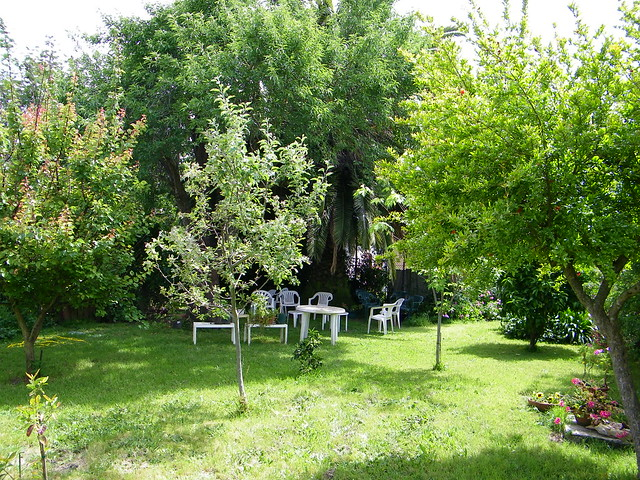 Back yard fruit trees flickr photo sharing for Trees for back garden