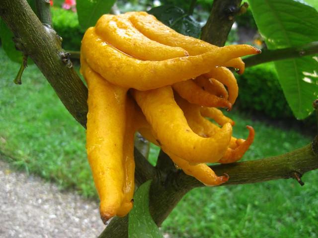 Freaky Citrus!!!