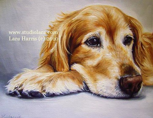 Sadie Girl, Golden Retriever Painting in OIL by LARA