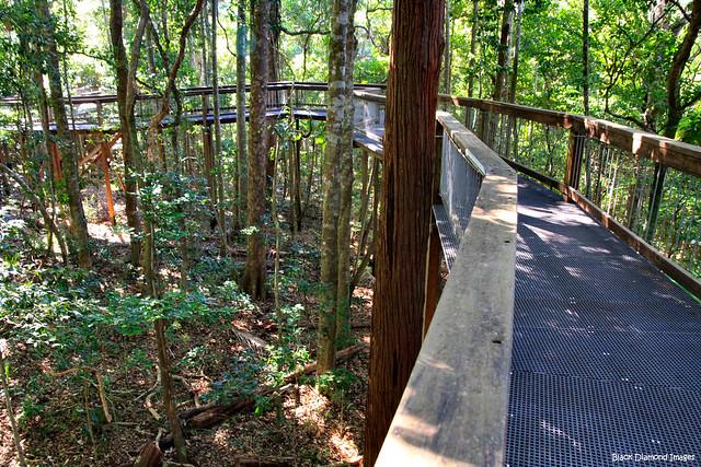 Sea Acres Nature Reserve Boardwalk - Port Macquarie