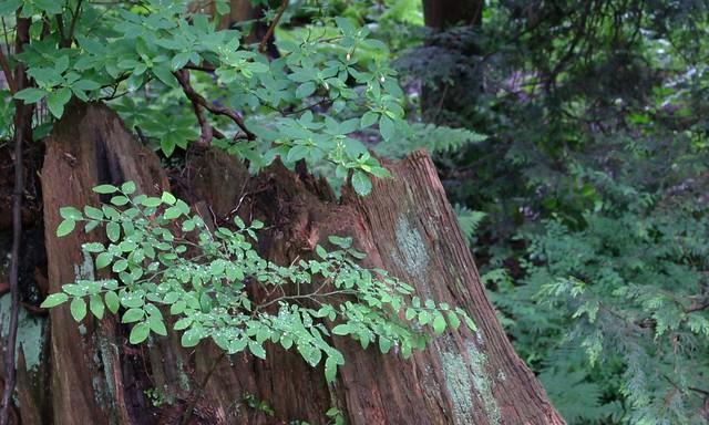 Woods_4303