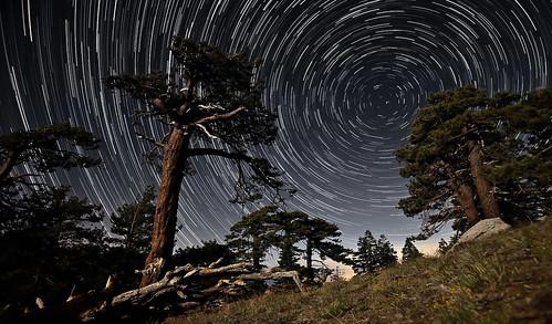 [フリー画像素材] 自然風景, 夜空, 星, 樹木 ID:201303252000