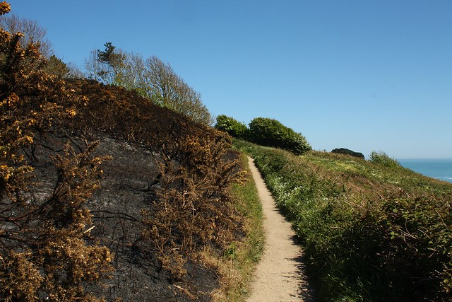 Gorse fire aftermath