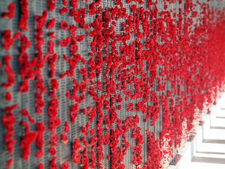 Poppies Left by Visitors to The Australian War Memorial | by publicdomainphotography