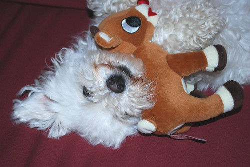 Smiling Phoebe likes a good cuddle with Rudolph