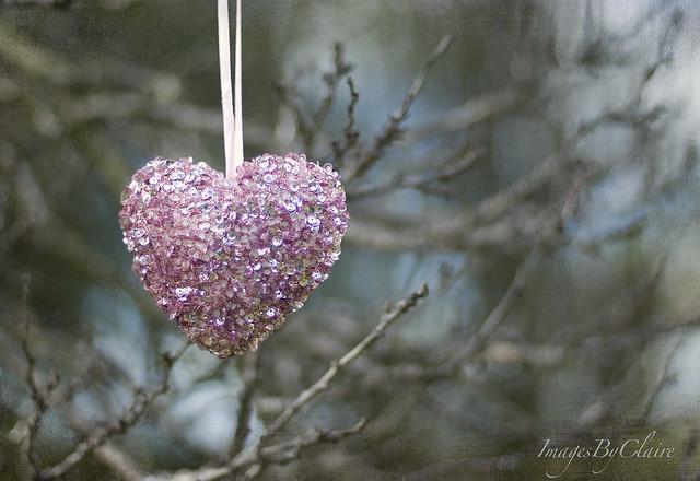 Pink Heart....{23/365}