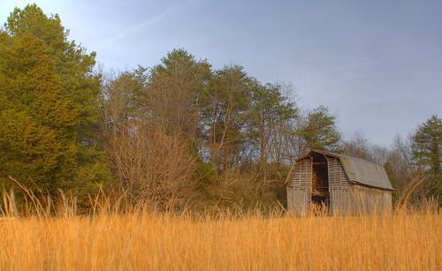 trees barn rural tin nc farm country rustic northcarolina hdr photomatix lincolncounty broomstraw davidhopkinsphotography ncpedia