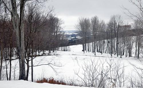 trees winter snow ny landscape footprints cortland