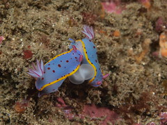 coral reef, animal, coral, marine biology, invertebrate, sea slug, underwater, reef,