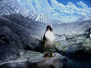 Penguin Tennessee Style