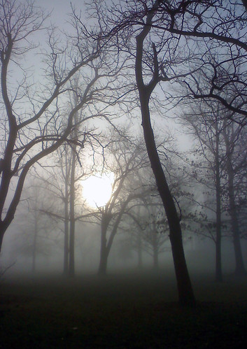 trees art fog darkness springbreak