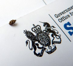 Government beetle