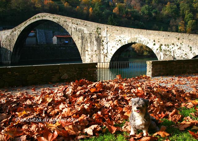 foto con cane al ponte del Diavolo Toscana