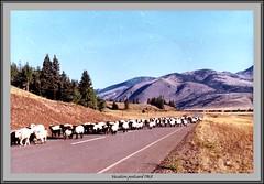 Vacation trip 1968