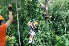 The Flight Of The Gibbon