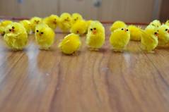 Waving Chicks Single Images
