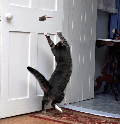 Cat Dancing 4