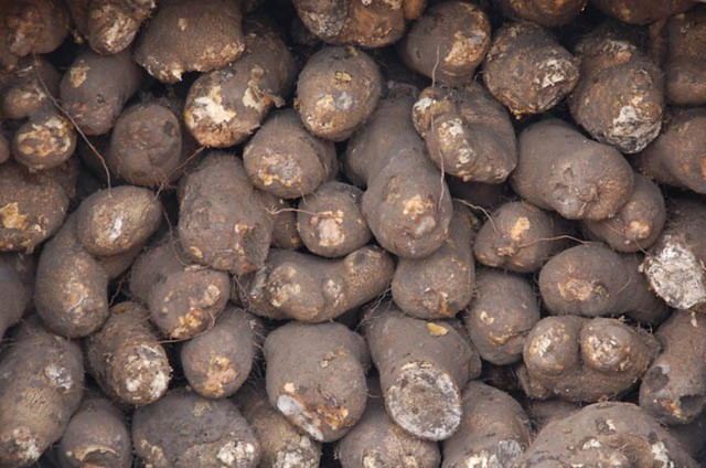 Yam Tubers For Sale In A Farmers Market In Nigeria