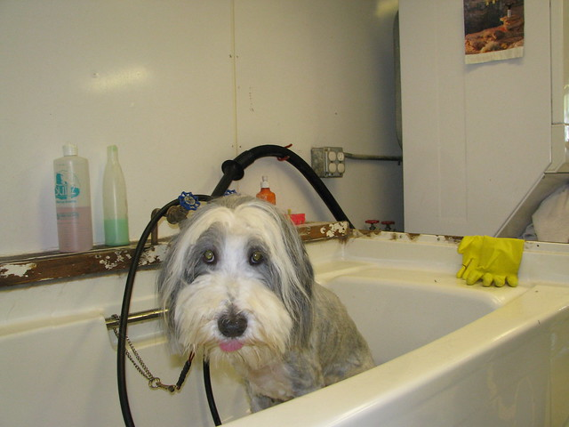 Dog Grooming In Marion Nc