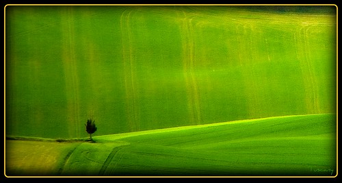Toscana - a lonely tree