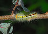 Caterpillar by Woolmarket100