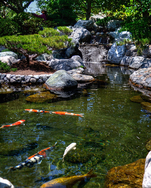 Koi pond flickr photo sharing for Koi fish pond help