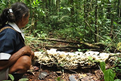 Piel de madre selva